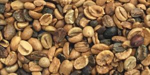 espressobohnen mit vielen defekten