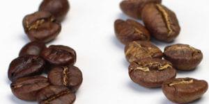 arabica-vs-robusta-unterschiede-geschmack